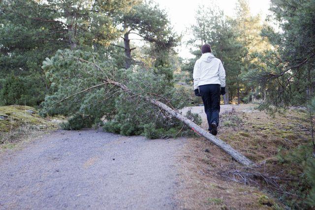 005 kaatunut puu.jpg